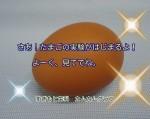 Nお話0L71444921988_1444922608 (450x356)